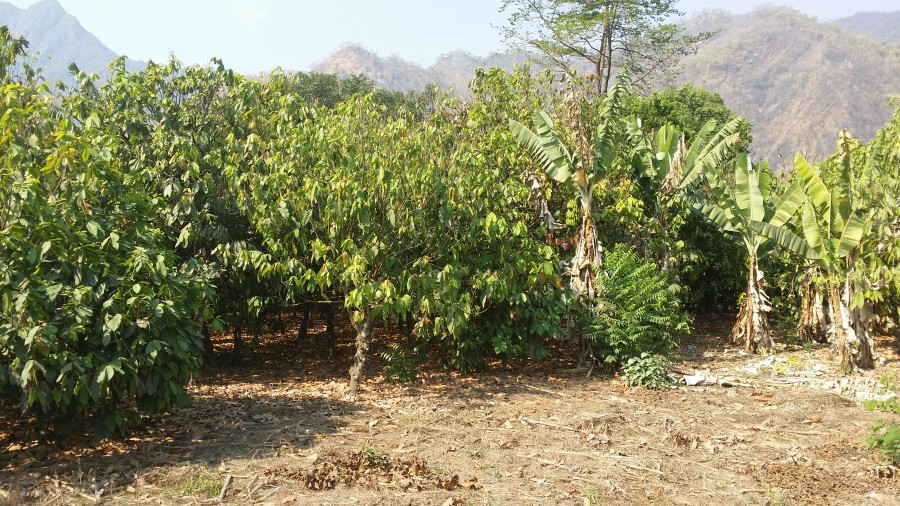 20151010_154037_Plantations3