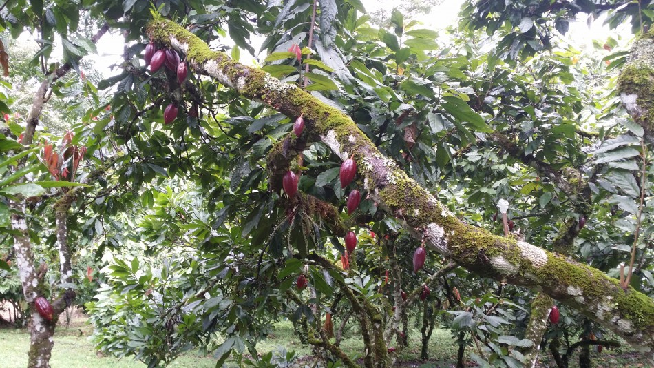 20160823_Vieille_Plantation_Nicaragua