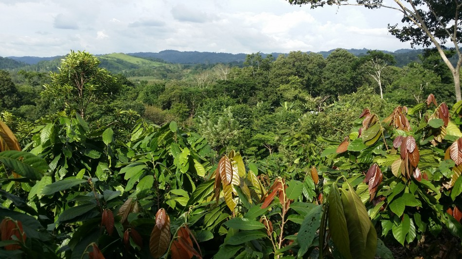 20160824_plantation_elcua