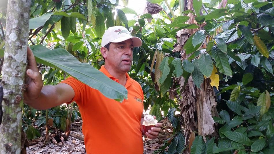 Agrocacao_Fernandez_Plantation_20160528