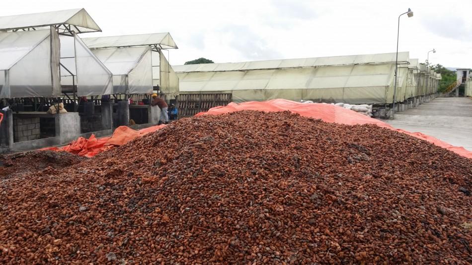 Conocado  - fèves de mauvaise qualité à part - 20160527