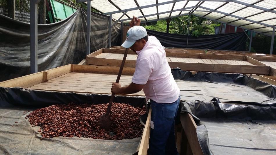 Nicaragua - Un séchoir à Waslala 20160830