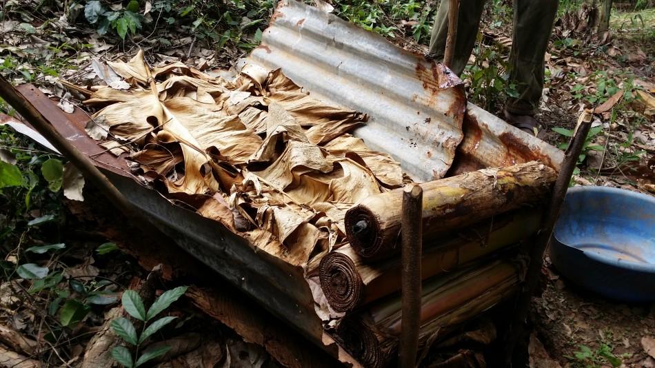 rci-mbrimbo-fermentation-dans-la-plantation-20160924