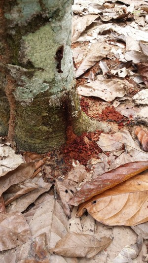 rci-termites-et-foreurs-20160926