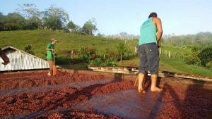 Fazenda Vera Cruz, Una (Bahia) - Barcasse