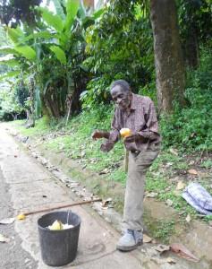 Cacao Gomme en bord de route - Sao Tomé