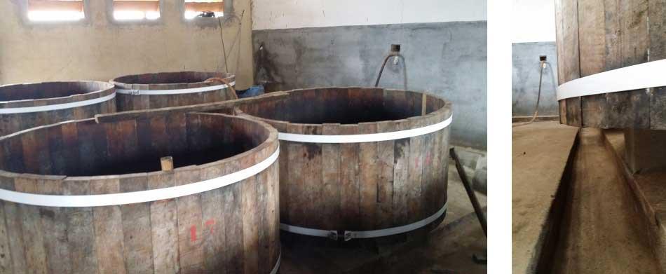 Tavarez_fermentattio_1+2