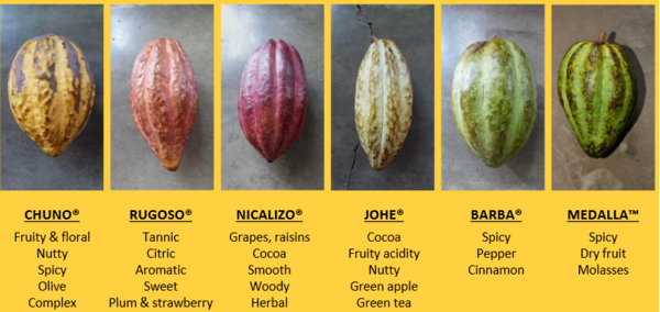 Source : Ingemann Cacao Fino